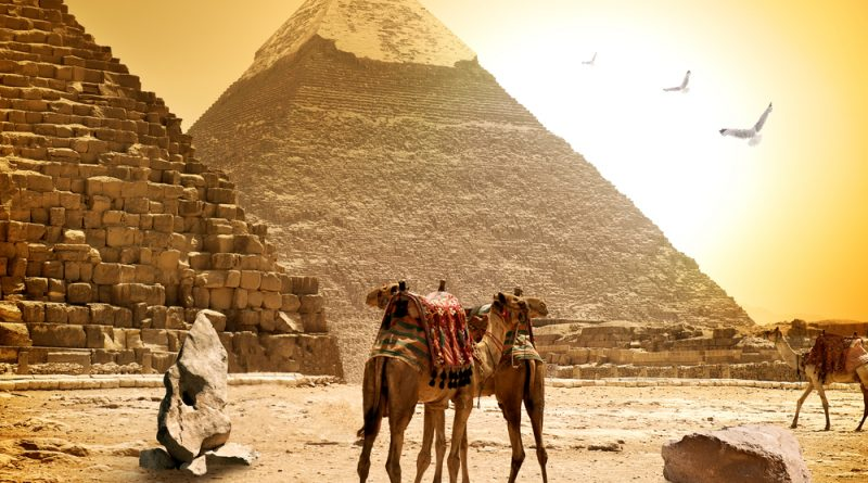 Camels and pyramids in Egypt